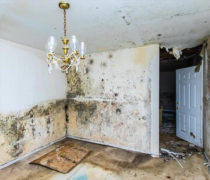 Mold Remediation Stopping and Removing Mold Damage in Goodyear